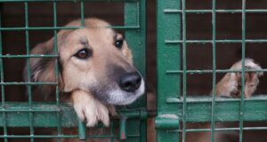 reasons-dogs-end-up-in-shelters-rescue-series-pt1